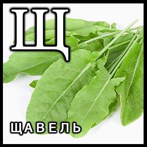 Ударение в слове дрова украинский язык