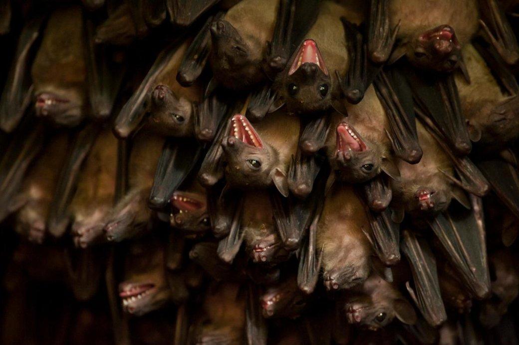 Хэллоуин еще некончился: лучшие фотографии летучих мышей отNatGeo - Изображение 3