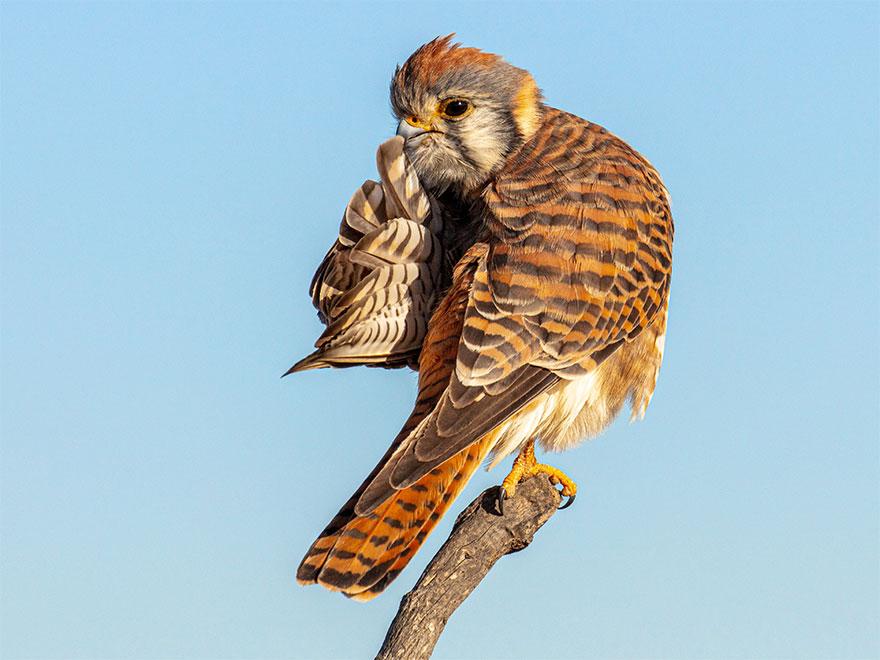Позитивная галерея: 40 фото сконкурса насамый смешной снимок дикой природы   Канобу - Изображение 3985
