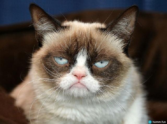 Скончалась кошка, которую весь мир знает по мему Grumpy Cat | Канобу - Изображение 0