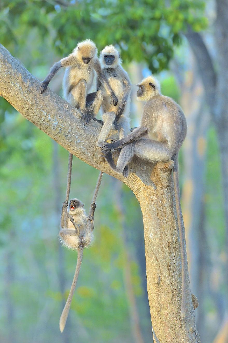 Позитивная галерея: 40 фото сконкурса насамый смешной снимок дикой природы   Канобу - Изображение 3960