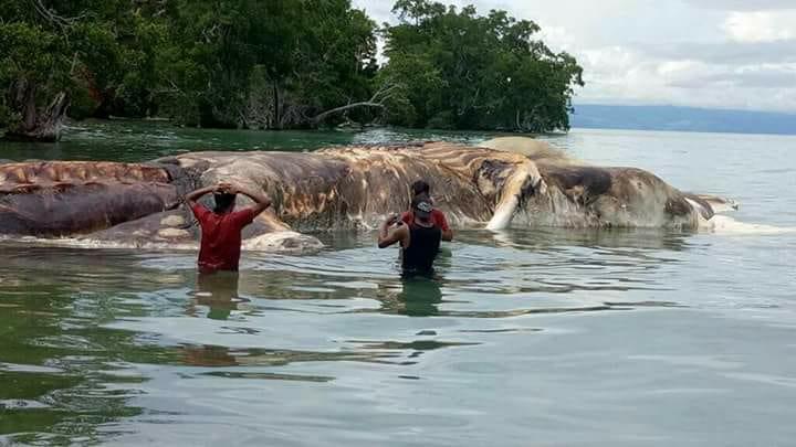 Что запокемон? Туша огромного морского животного пугает индонезийцев   Канобу - Изображение 3