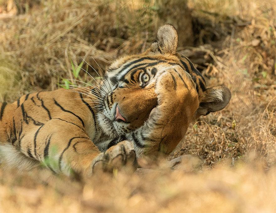 Позитивная галерея: 40 фото сконкурса насамый смешной снимок дикой природы   Канобу - Изображение 3988