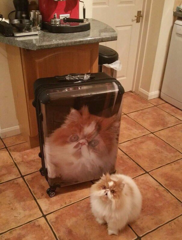 Ненависть, грусть, безысходность и коты. Вспоминаем самые забавные фотографии ко дню кошек!. - Изображение 18